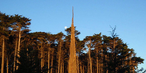SF-Presidio-goldsworthy-spire-moonrise-400pix