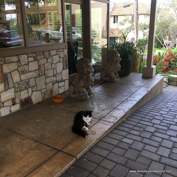 83-cat gallery-Carmel-California--Tradewinds Carmel-cat-Sweetie-at entrance-c2017 Carole Terwilliger Meyers-600pix