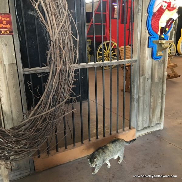 84-cat gallery-Amarillo-Texas-Big Texan Steak Ranch-c2018 Carole Terwilliger Meyers
